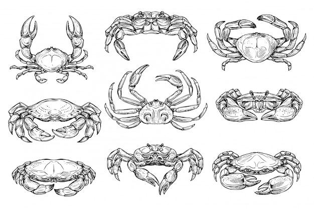 Esboços de animais de caranguejo marinho crustáceo
