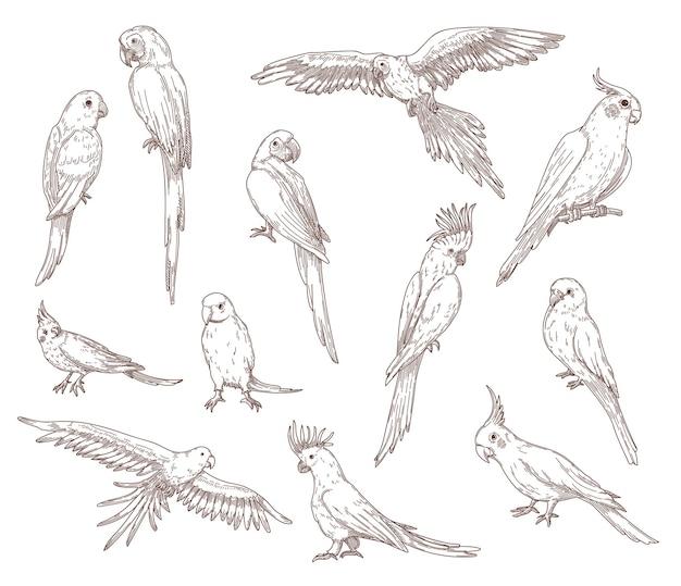 Esboços de papagaios desenhados à mão