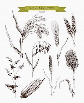 Esboços de plantas agrícolas de mão desenhada. coleta de plantas esboçadas à mão de cereais e leguminosas