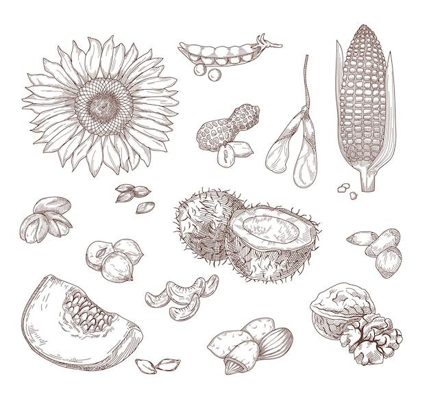 Esboços desenhados à mão de nozes e sementes.