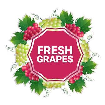 Espaço colorido da cópia do círculo da fruta das uvas orgânico sobre o fundo branco do teste padrão, estilo de vida saudável ou conceito da dieta