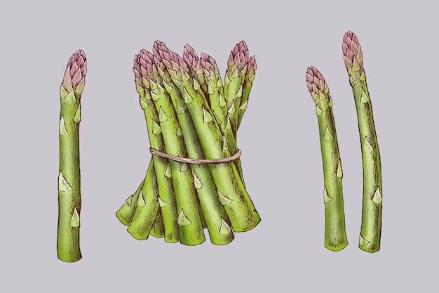 Espargos orgânicos recém-amarrados