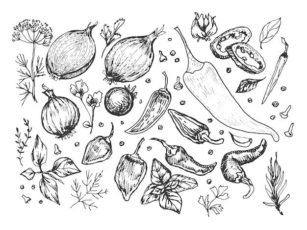 Especiarias, alho, legumes, ervas, cozinhar ilustrações vetoriais à mão. gravura, impressão, têxtil, menu, receita, culinária, comida, cebola, manjericão, cozinha, conjunto, patern, seamless