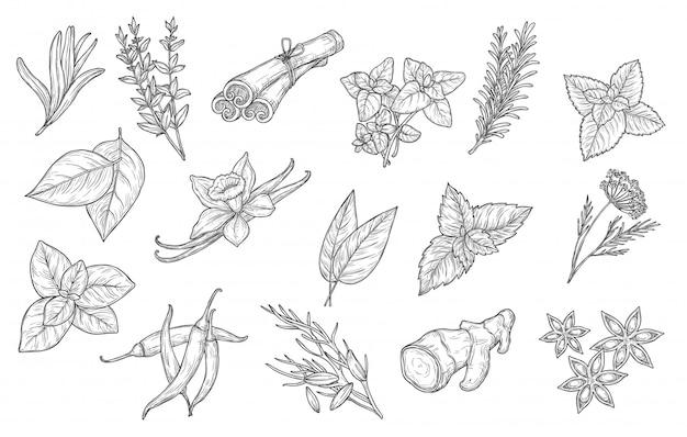 Especiarias culinárias e ícones de ervas de tempero de cozinha