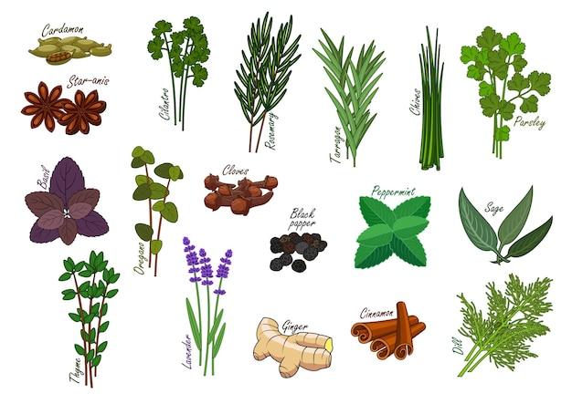 Especiarias e ervas de cozinha, condimentos. cardamomo e anis estrelado, coentro e coentro, alecrim e estragão, cebolinha e salsa, manjericão e orégano, pimenta-do-reino e hortelã-pimenta, sálvia e tomilho