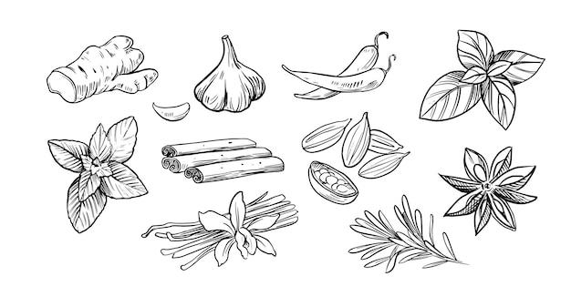 Especiarias e ervas. mão-extraídas ilustrações vetoriais isoladas no fundo branco. estilo de esboço