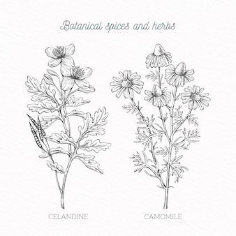 Especiarias handdrawn e ervas