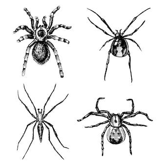 Espécies de aranhas ou aracnídeos, insetos mais perigosos do mundo, vintage antigo para o projeto de halloween ou fobia. mão desenhada, gravada pode usar para tatuagem, teia e viúva negra venenosa, tarântula, birdeater