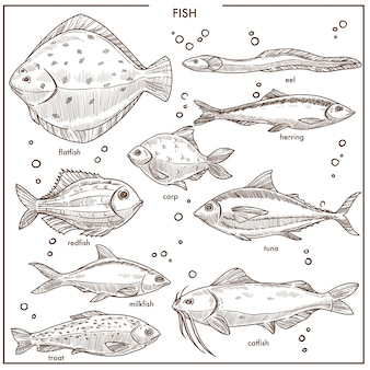 Espécies de peixe esboço com nomes vector isolado de pesca conjunto de ícones