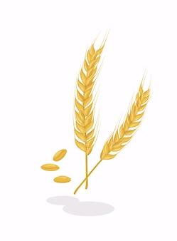 Espiga de trigo realista.
