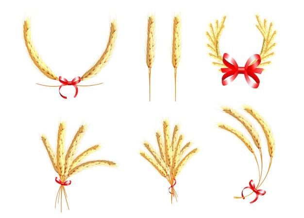 Espigas de trigo, aveia, centeio e cevada