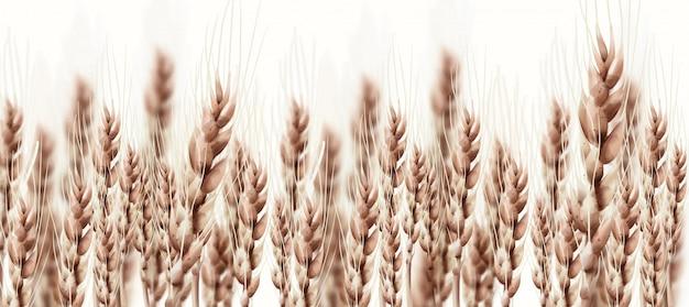 Espigas de trigo cartão de outono outono. poster rústico vintage. banners de colheita crescente