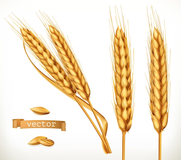 Espigas de trigo. conjunto de ícones 3d