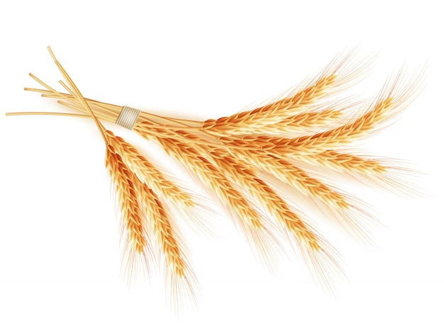 Espigas de trigo no fundo branco.
