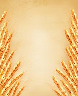 Espigas de trigo no velho paoer. ilustração