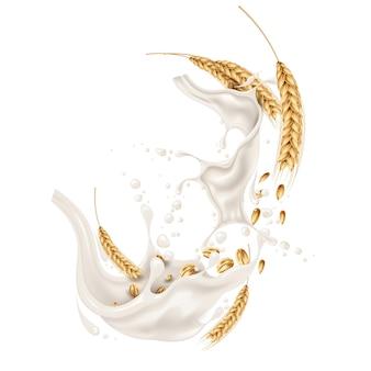 Espiguetas de espigas de trigo com grãos em explosão de respingos de leite