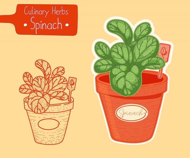 Espinafre crescendo em uma panela