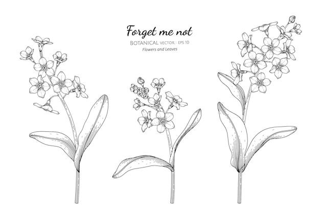 Esqueça-me não flor e folha mão desenhada ilustração botânica com arte de linha.