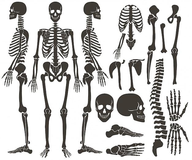Esqueleto de ossos humanos