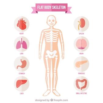 Esqueleto do corpo plana