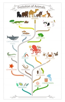 Esquema de animais de evolução biológica