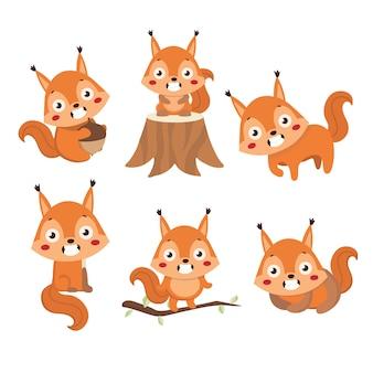 Esquilo bonito pequeno em poses diferentes.