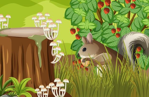 Esquilo escondido na floresta