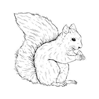 Esquilo preto e branco com desenho à mão ou estilo de esboço