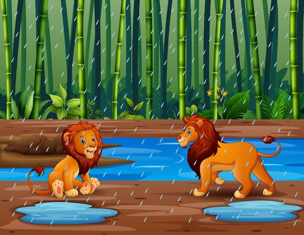 Estação chuvosa com leões na floresta de bambu