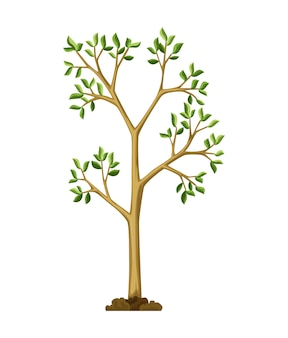 Estágio de crescimento da árvore. crescimento de árvore grande com folhas e galhos verdes. ilustração da planta da natureza.