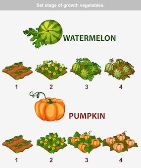 Estágio de vegetais de crescimento. melancia e abóbora