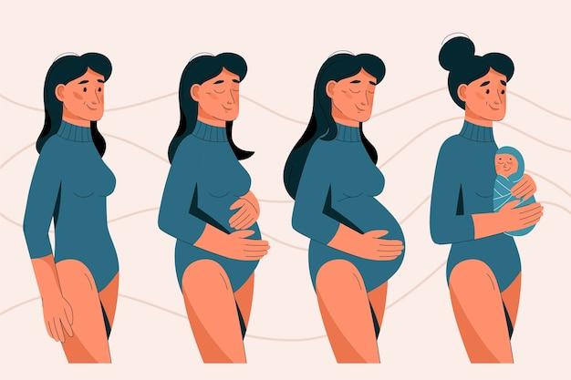 Estágios da gravidez ilustrados