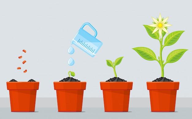 Estágios de crescimento de plantas.
