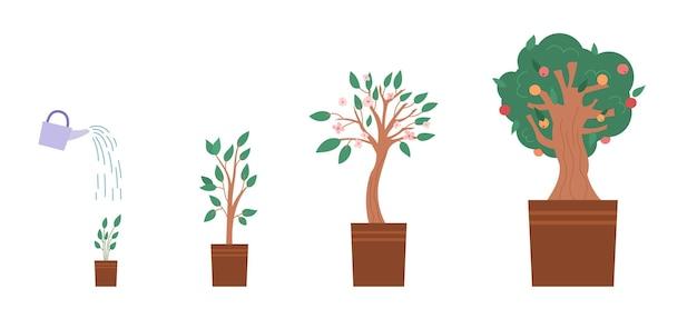 Estágios de cultivo de macieira no jardim, desde a muda até a planta verde com frutas