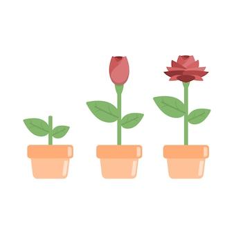 Estágios do objeto de desenhos animados de plantas de crescimento