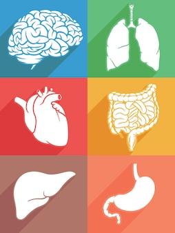 Estêncil de partes do corpo do órgão interno da silhueta humana