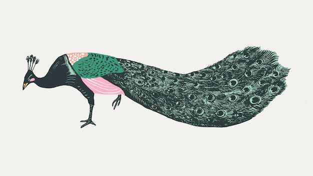 Estêncil vintage de animal exótico de pavão colorido