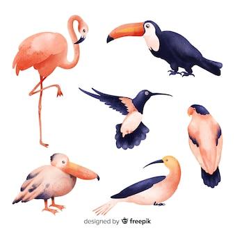 Estilo de aquarela de coleção de aves exóticas