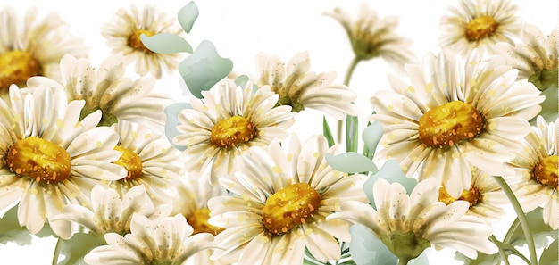 Estilo de aquarela de flores margarida