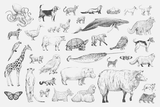 Estilo de desenho de ilustração da coleção animal