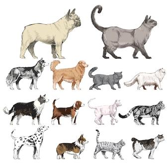 Estilo de desenho de ilustração da coleção de animais