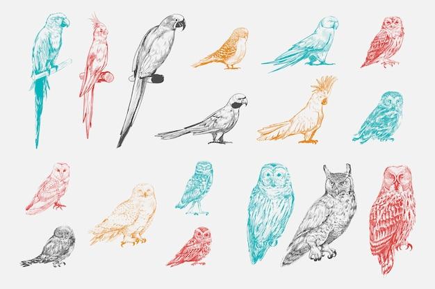 Estilo de desenho de ilustração da coleção de aves papagaio