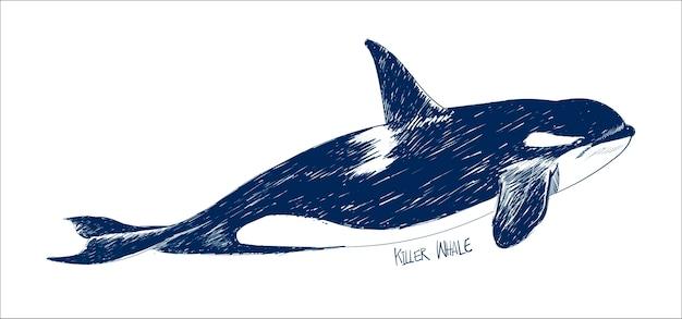 Estilo de desenho de ilustração de baleia assassina