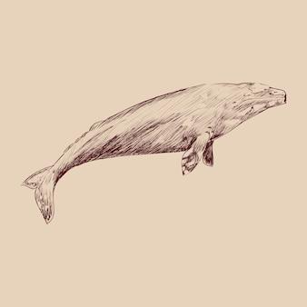 Estilo de desenho de ilustração de baleia cinzenta