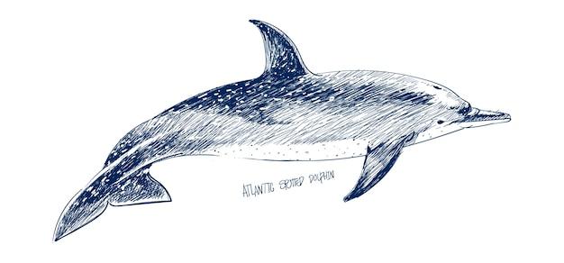 Estilo de desenho de ilustração de golfinho pontilhado atlântico