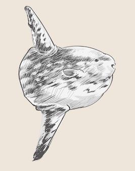 Estilo de desenho de ilustração de peixe do mar