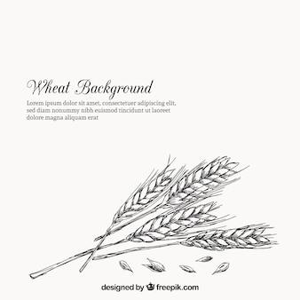 Estilo de trigo em estilo desenhado à mão