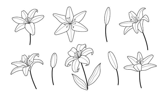 Estilo mínimo da linha do logotipo de flores de lírio.