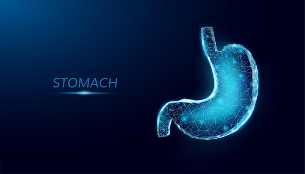 Estômago humano. estilo wireframe low poly. ilustração em vetor 3d moderna abstrata em fundo azul escuro.