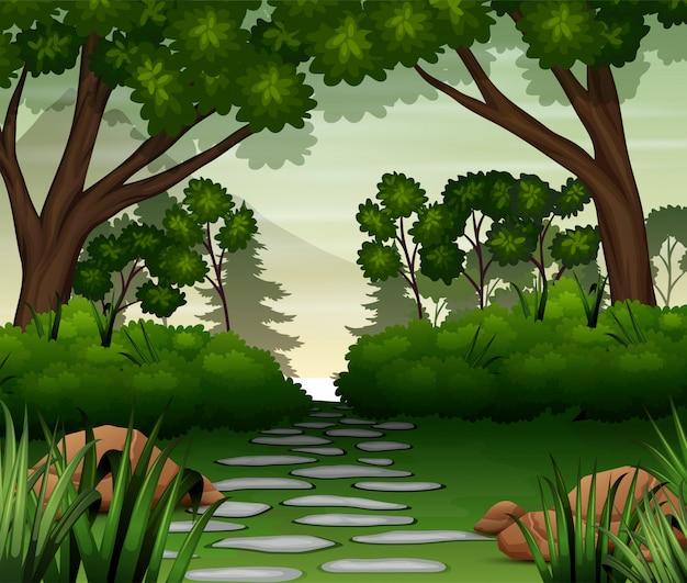 Estrada de pedra na floresta